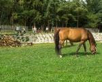 cvičení s koníky